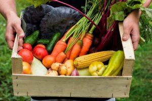 سبدی از مواد خوراکی ارگانیک