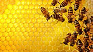 عسل تولید شده در کندو، از پرفایده ترین خوراکی های جهان است